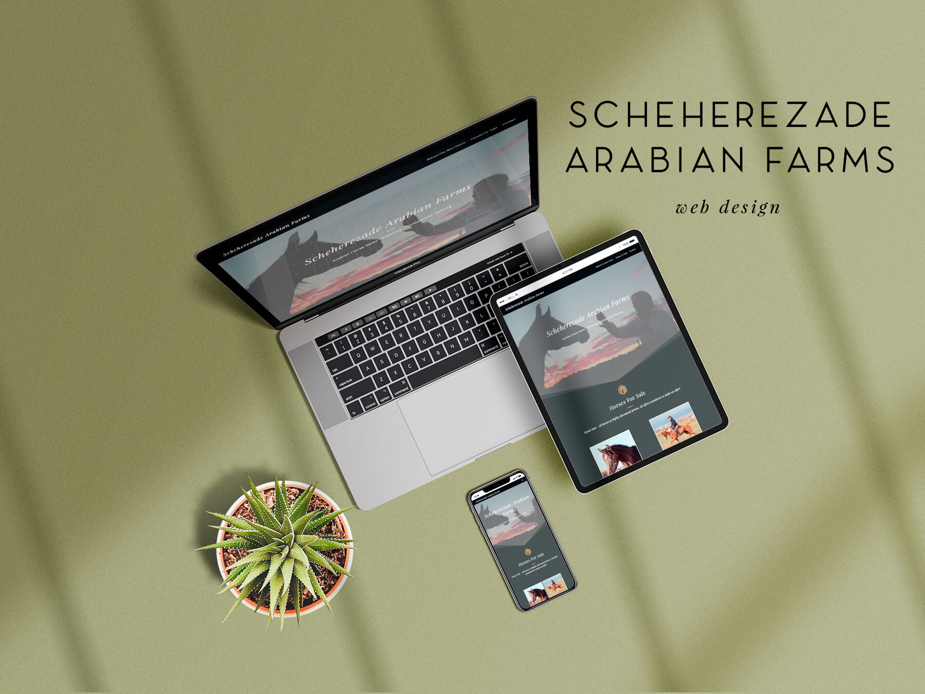 ns-design-scheherezade-arabian-farms-web-design